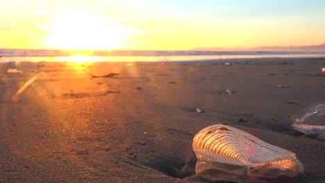 Algas-Y-Criaturas-Costeras-A-Lo-Largo-De-Una-Playa-De-California-Al-Atardecer