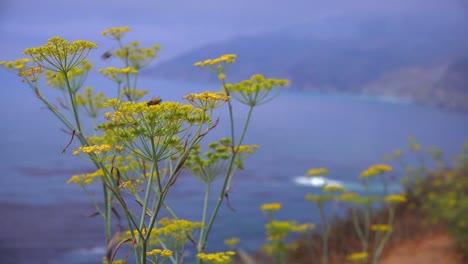 Flores-De-Salvia-Crecen-A-Lo-Largo-De-La-Carretera-Uno-De-California