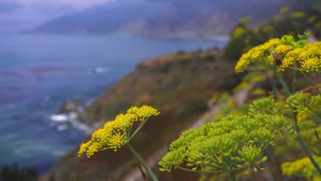 Las-Abejas-Se-Posan-Sobre-Las-Flores-De-Salvia-Que-Crecen-A-Lo-Largo-De-La-Autopista-Uno-De-California