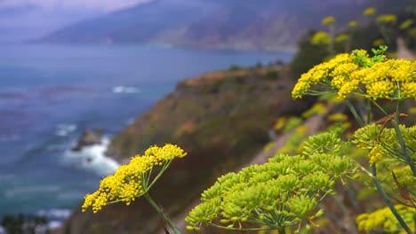 Las-Abejas-Se-Posan-Sobre-Las-Flores-De-Salvia-Que-Crecen-A-Lo-Largo-De-La-Autopista-Uno-1-De-California