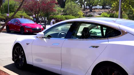 Tesla-electric-cars-sit-in-a-parking-lot-charging