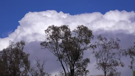 Thunderhead-clouds-form-behind-trees-as-a-storm-approaches-in-this-time-lapse-shot