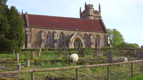 A-small-church-in-a-small-English-village-with-sheep-grazing
