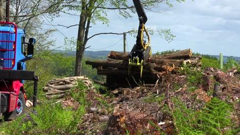 Una-Garra-Carga-Madera-En-Un-Camión-En-Un-área-Deforestada-1