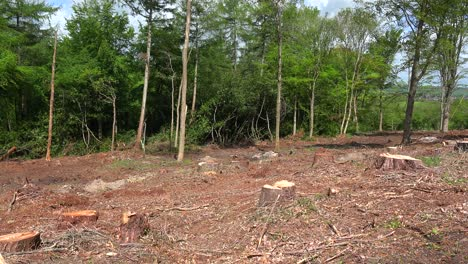 Pan-across-a-deforested-area-with-stumps-and-cut-trees