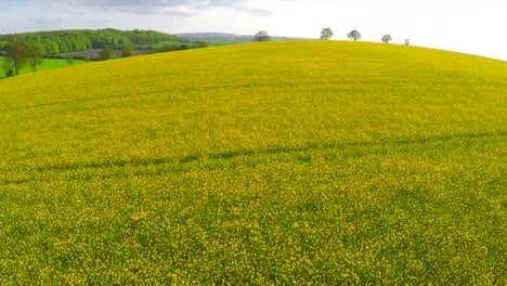 A-beautiful-aerial-over-yellow-fields-in-England