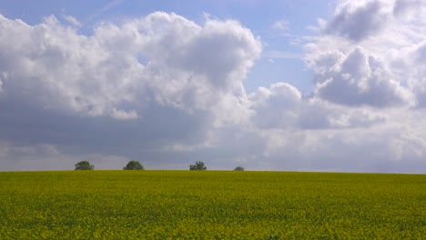 A-beautiful-time-lapse-of-clouds-over-yellow-fields-in-England