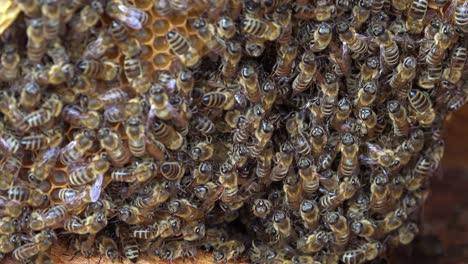 An-extreme-close-up-of-a-bees-swarming-in-a-beehive