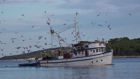 A-fishing-boat-comes-into-port-with-hundreds-of-seagulls-in-pursuit-1