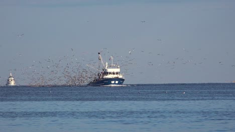 A-modern-fishing-boat-comes-into-port-with-hundreds-of-seagulls-in-pursuit