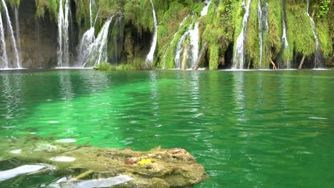 Tilt-up-from-green-pool-to-beautiful-waterfall-at-Plitvice-National-Park-in-Croatia