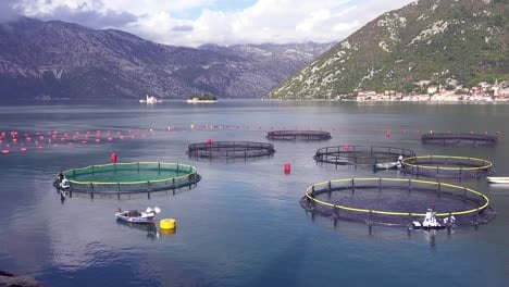 Workers-feed-fish-in-a-fish-farm-in-Boka-Bay-Montenegro