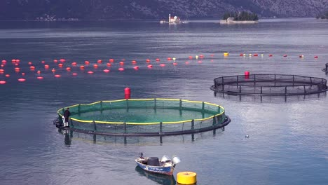 Workers-feed-fish-in-a-fish-farm-in-Boka-Bay-Montenegro-2