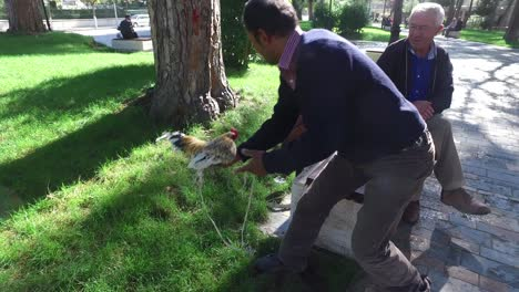 Albanian-men-sit-on-a-bench-with-their-pet-chicken-on-a-leash-in-the-park-and-enjoy-conversation