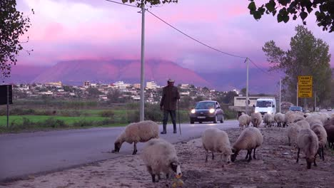 Albanian-shepherd-s-lead-their-flocks-along-a-road-at-sunset