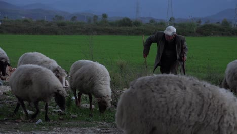 Albanian-shepherd-s-lead-their-flocks-along-a-road-at-sunset-1