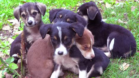 Small-puppy-dogs-play-in-the-grass