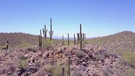 Aerial-shot-over-cactus-in-Saguaro-national-Park-near-Tucson-Arizona