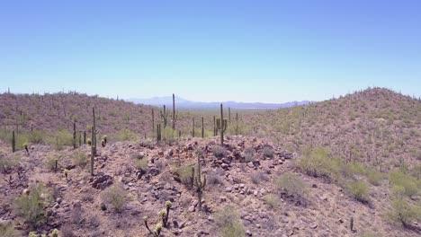 Aerial-shot-over-cactus-in-Saguaro-national-Park-near-Tucson-Arizona-1