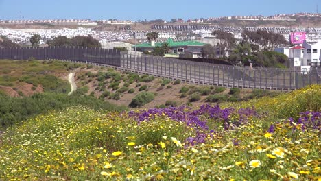 Wildflowers-grow-in-front-of-the-border-wall-between-San-Diego-and-Tijuana