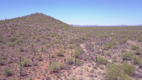 Aerial-shot-over-desert-cactus-in-Saguaro-National-Park-near-Tucson-Arizona-1