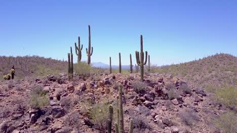 Aerial-shot-over-desert-cactus-in-Saguaro-National-Park-near-Tucson-Arizona-2
