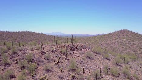 Aerial-shot-over-desert-cactus-in-Saguaro-National-Park-near-Tucson-Arizona-3