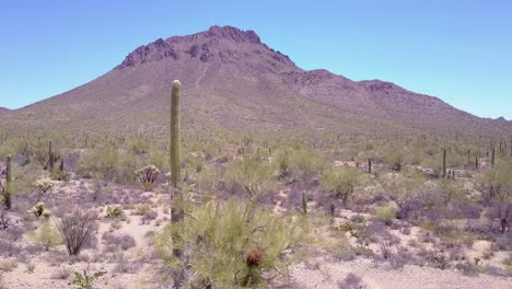 Aerial-shot-around-desert-cactus-in-Saguaro-National-Park-near-Tucson-Arizona