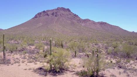 Aerial-shot-around-desert-cactus-in-Saguaro-National-Park-near-Tucson-Arizona-1