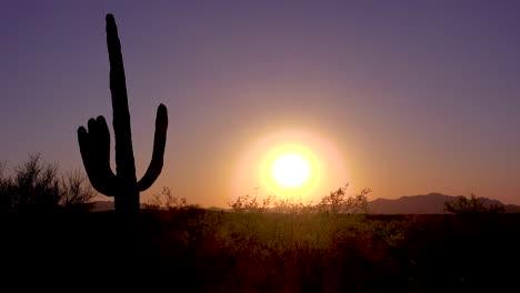 A-beautiful-sunset-at-Saguaro-National-Park-perfectly-captures-the-Arizona-desert-1