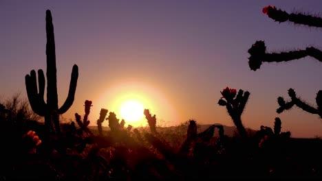 A-beautiful-sunset-behind-cactus-at-Saguaro-National-Park-perfectly-captures-the-Arizona-desert