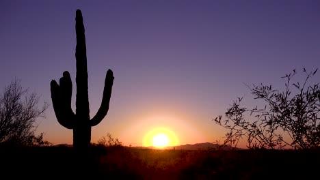 A-beautiful-sunset-or-sunrise-behind-cactus-at-Saguaro-National-Park-perfectly-captures-the-Arizona-desert