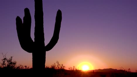 A-beautiful-sunset-or-sunrise-behind-cactus-at-Saguaro-National-Park-perfectly-captures-the-Arizona-desert-2