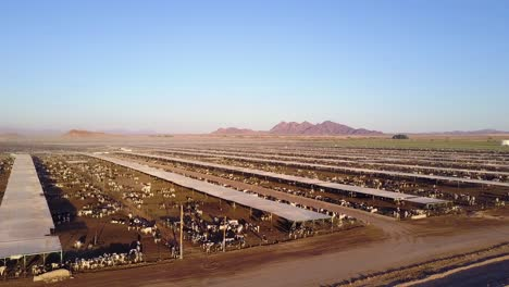 An-aerial-over-vast-stockyards-of-beef-cattle-in-the-American-west