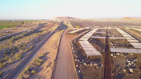 An-aerial-over-vast-stockyards-of-beef-cattle-in-the-American-west-1