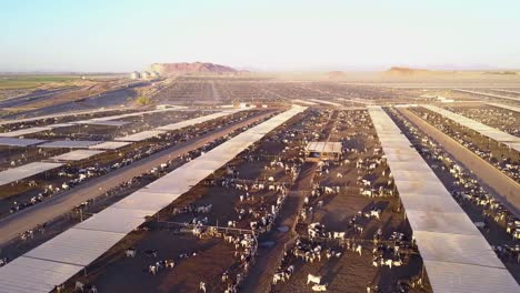 An-aerial-over-vast-stockyards-of-beef-cattle-in-the-American-west-2