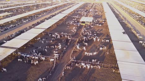 An-aerial-over-vast-stockyards-of-beef-cattle-in-the-American-west-3