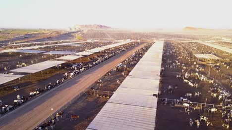 An-aerial-pan-over-vast-stockyards-of-beef-cattle-in-the-American-west