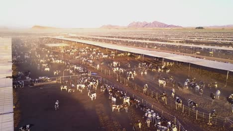 An-aerial-rising-shot-over-vast-stockyards-of-beef-cattle-in-the-American-west