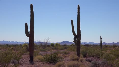 A-beautiful-shot-of-two-cactus-in-the-Sonoran-desert-perfectly-captures-the-Arizona-desert