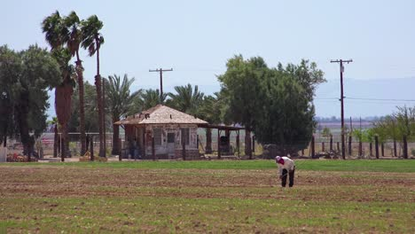 An-old-Mexican-farmer-works-in-a-field-in-the-California-desert