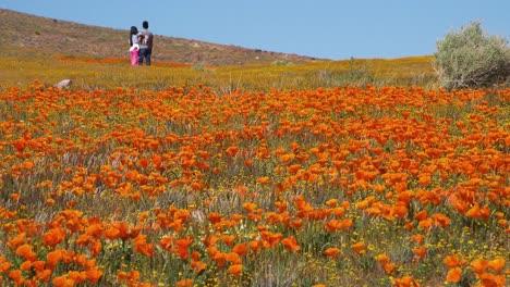 Una-Pareja-Se-Encuentra-En-Un-Enorme-Campo-De-Flores-Silvestres-De-Amapola-De-California-1