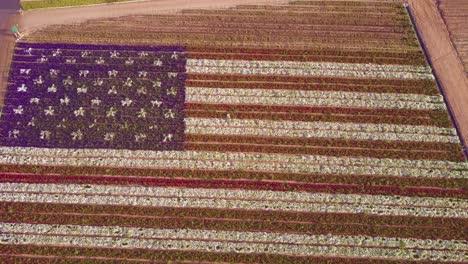 Una-Toma-Aérea-Sobre-Una-Bandera-Estadounidense-Gigante-Hecha-De-Flores-