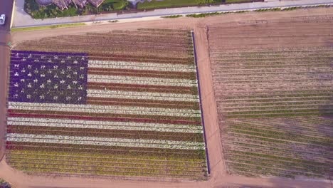 An-vista-aérea-shot-over-a-giant-American-flag-made-of-flowers-1