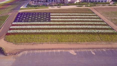 Eine-Luftaufnahme-über-Einer-Riesigen-Amerikanischen-Flagge-Aus-Blumen-2