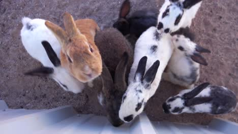 Cute-little-bunny-rabbits-beg-for-food-in-a-pen