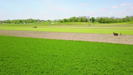Una-Hermosa-Antena-De-Agricultores-Amish-Cuidando-Sus-Campos-Con-Caballos-Y-Arado