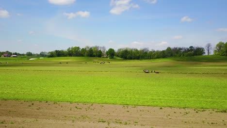 Una-Hermosa-Antena-De-Granjeros-Amish-Cuidando-Sus-Campos-Con-Caballos-Y-Arado-1