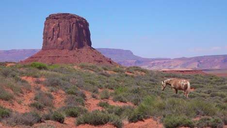 Horses-graze-with-the-natural-beauty-of-Monument-Valley-Utah-in-the-background