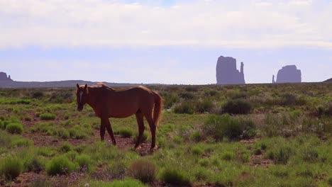 Los-Caballos-Pastan-Con-La-Belleza-Natural-Del-Valle-Del-Monumento-Utah-En-El-Fondo-3